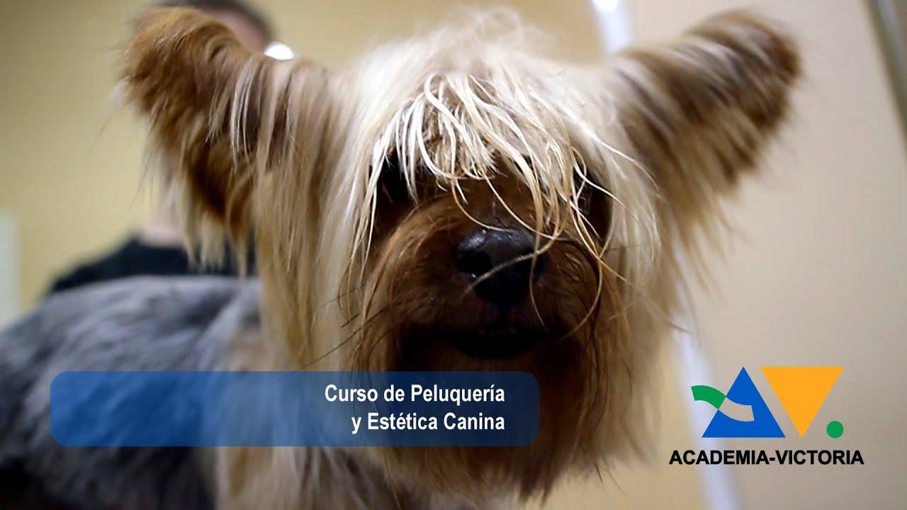 peluquería canina profesional