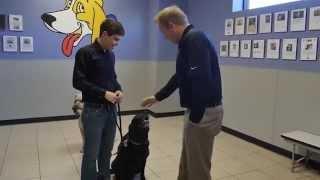 Dallas Dog Training