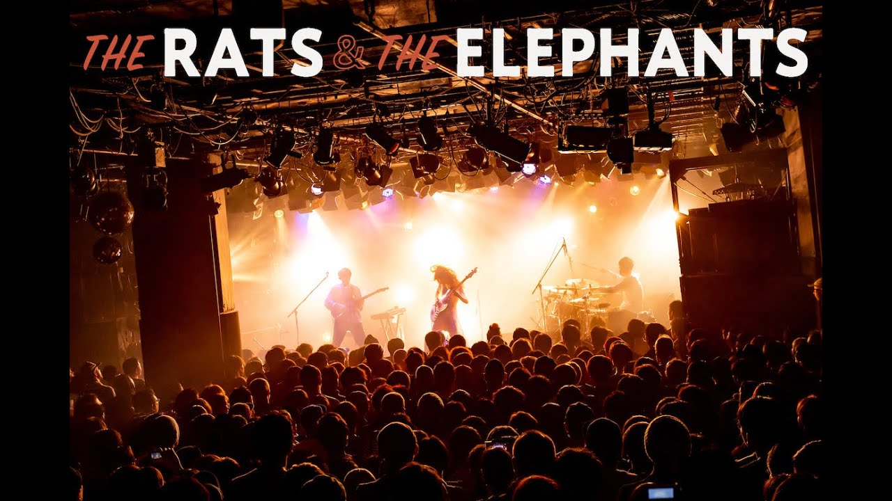 Elephant Gym / THE RATS AND THE ELEPHANTS - Live Video Teaser