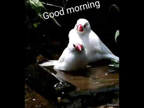 Cute birds gif