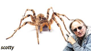 Here's Why this Spider Will Destroy Your Car