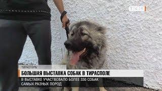 Большая выставка собак в Тирасполе