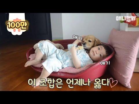 (귀여움감수) 대박 아기와 강아지 조합은 사랑