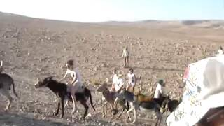 A Donkey Getting Fu**'ed - While a child is on it!  - Funniest Video you will ever see! Part 2
