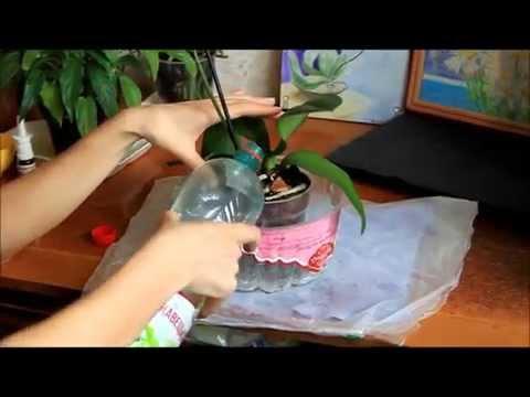 Полив орхидеи после пересадки часть 1