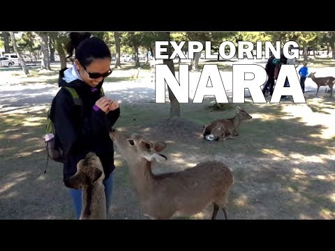 Nara Japan Day Trip | Must Do Activities