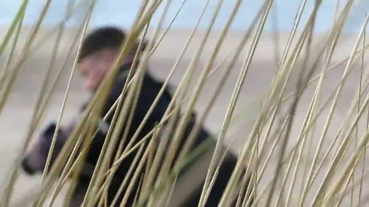 Koekeloeris op het strand