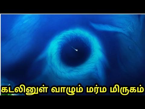 11 கி.மீ ஆழமான மர்ம கடலில் வாழும் மர்ம உயிரினம் | Documentary about Mariana trench in tamil |