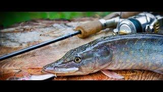 Ловля хищной рыбы летом