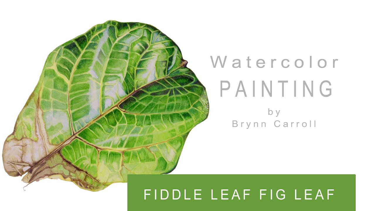 how to paint a realistic fiddle leaf fig leaf youtube