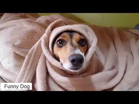 Funny Dog – Smart funny dogs video compilation 2016