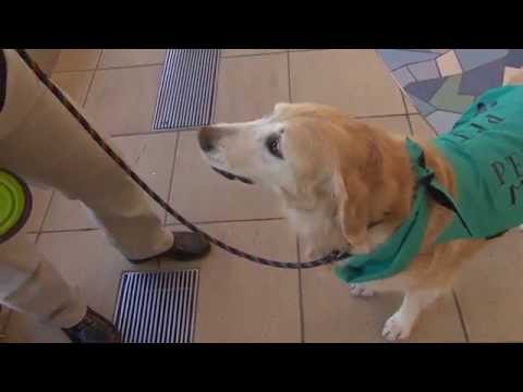 Pet therapy for jittery flyers