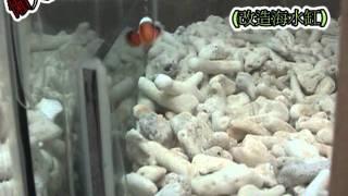 海水缸改造成免換水生態水草魚缸
