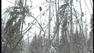 Медведь на верхушке дерева