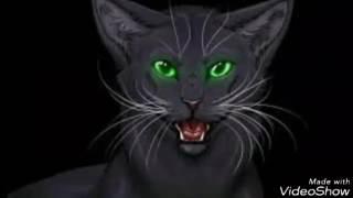 История Остролистой (Для Коты воители Острозвёздая)