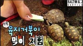 육지거북이 먹이체험~! 거북이를 별로 않좋아하는...솔…