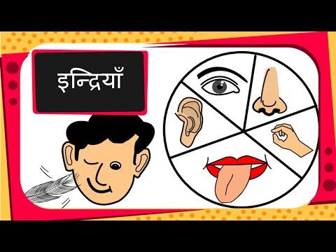 Science human sense organs hindi youtube science human sense organs hindi ccuart Gallery