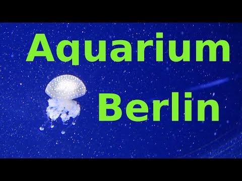 Aquarium Berlin - Von Koralle bis Hai, alles dabei!