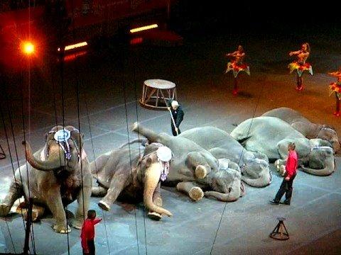 Circus Elephant Performance