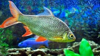 How to Clean Dirty Fish Tank Glass   Aquarium Care