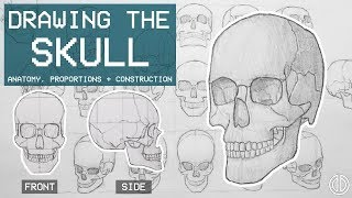 Drawing The SKULL - Anatomy, Proportions & Construction - Anatomy 1