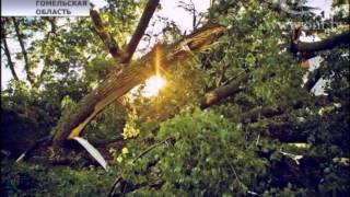 В Гомельской области ликвидируют последствия урагана