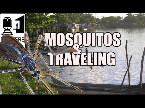 Mosquitos in Brazil: How to Avoid Mosquito Bites While Traveling