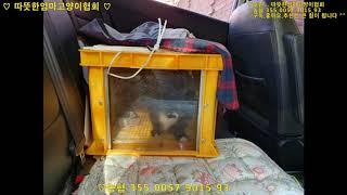 [따뜻한엄마고양이협회]중성화를위한[TNR 1편].