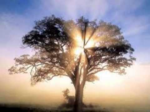 Soñar Con árbol Youtube