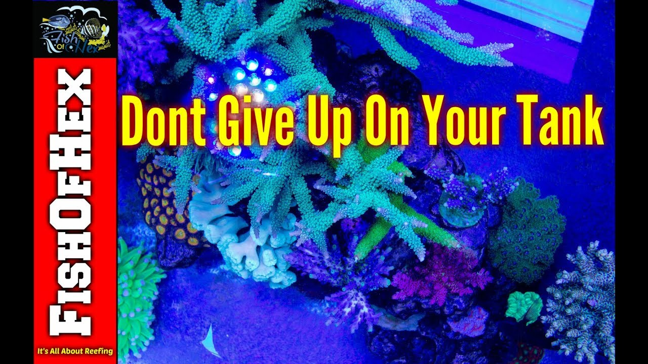 Don't Give Up On Your Reef Tank - Custom Aquariums 2019-02-20 12:02