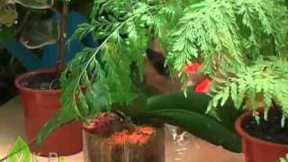 Уход за комнатными растениями (ukrsad.org).mp4(http://ukrsad.org/ Как нужно ухаживать за домашними цветами., 2011-04-18T15:59:45.000Z)