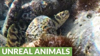 Swimmer almost steps on moray eel at the beach