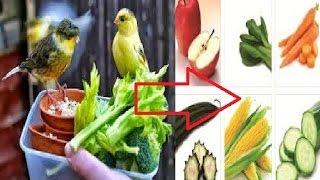 WAJIB DI KETAHUI!! Makanan Kenari Biar Cepat  Gacor Dan  Ngerol Panjang