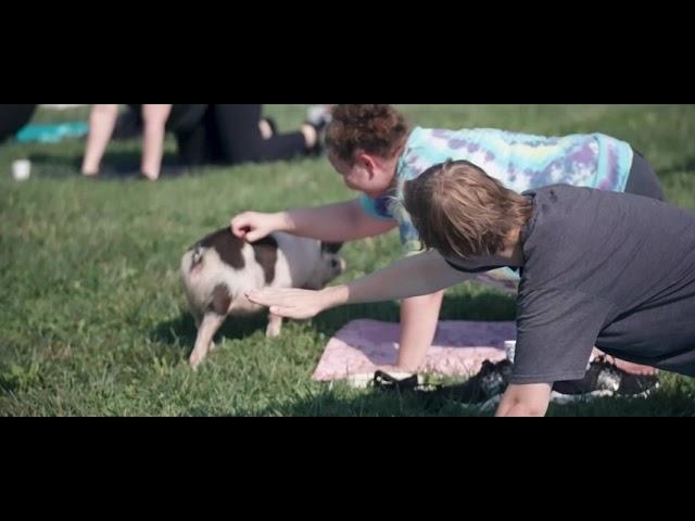 BIG Pig Yoga at Big Cork Vineyards - Yoga with Baby Piglets