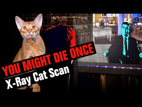 X-Ray Cat Scan | YOU MIGHT DIE ONCE | JAMBON BALONEY