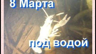 Подводная охота на Южном Буге - Встречаем 8 Марта под водой.