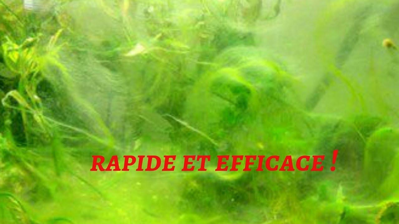 Se débarrasser des algues une bonne fois pour toute ! - YouTube