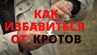 видео Как избавиться от кротов на дачном участке народными средствами