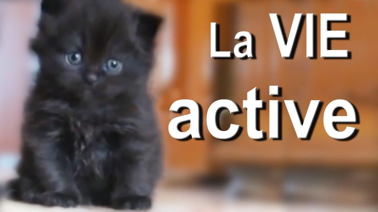 LA VIE ACTIVE - PAROLE DE CHAT