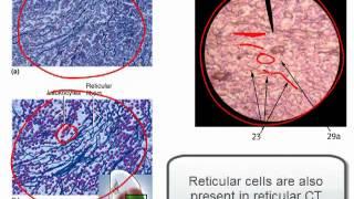 Connective Tissue Part 1