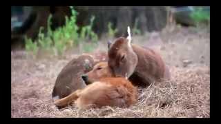 Смешные животные   Селфи