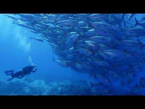 Balicasag Island 4K