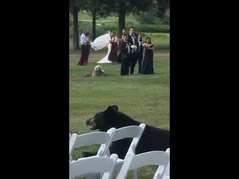 Randi West - Bear crashes a wedding!