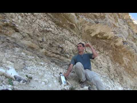 Stevns Vid14 Early Paleogene Beds