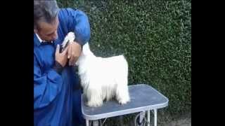 Trimming (arreglo,peluquería) Parte 2 Del West Highland White Terrier (westie,westy) De Pizpiretas