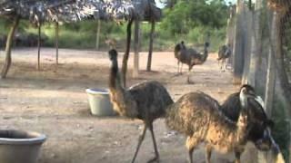 EMU Farming in Hyderabad
