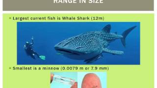 Introduction to Ichthyology Lecture