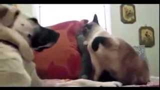 Смешные кошки / ★