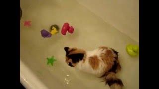 Кошка Соня водолаз или водолюб видео
