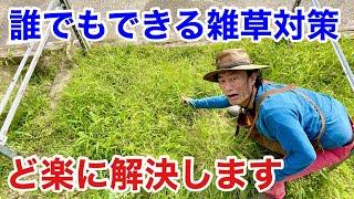 【これ植えるだけ】 草取りを楽にする方法教えます  【カーメン君】【園芸】【ガーデニング】【初心者】【雑草】